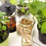 7 أعشاب تساعد على خسارة الوزن