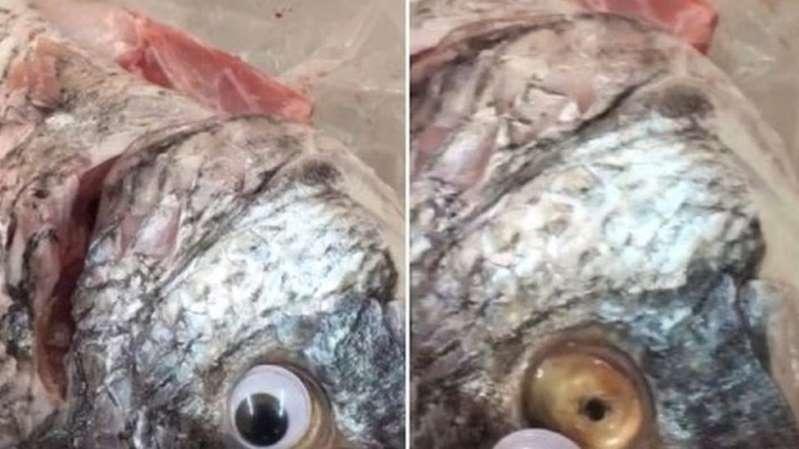 """متجر في الكويت يبيع أسماكا بـ""""عدسات لاصقة"""""""