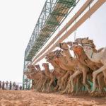 أول سعودية تشارك في مضمار سباقات الهجن