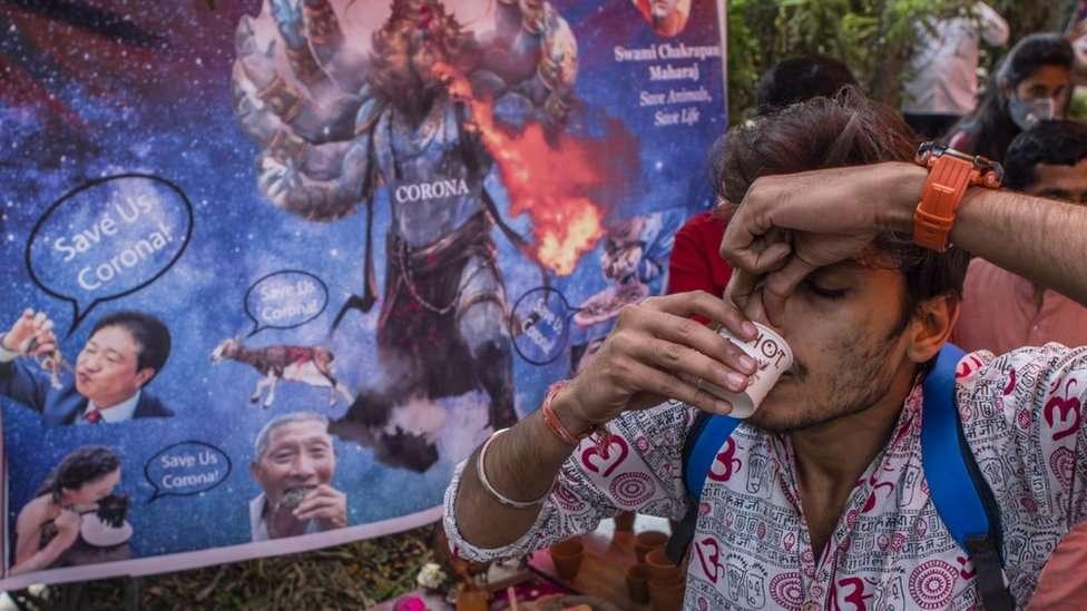 """في الهند.. بول البقر """"علاج ناجع"""" لفيروس كورونا"""